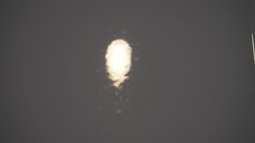 アルピナシミ前171103.JPG