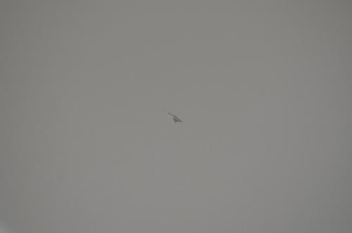 レヴォーグ飛び石施工前150108.JPG