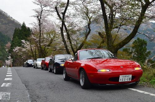 桜160410.JPG